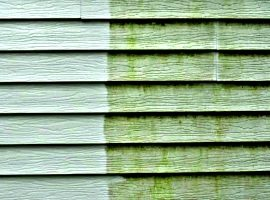 Roof, Siding House Cleaning