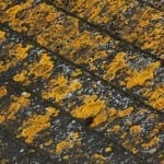 roof lichens- westchester power washing