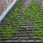 roof moss- Westchester Power Washing