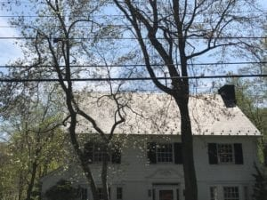 After of a dirty roof, fungus, mold, mildew, shingle, asphalt roof, armonk, chappaqua, scarsdale, soft washed , roof shampoo